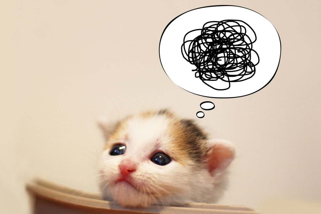 画像:困っている猫の画像